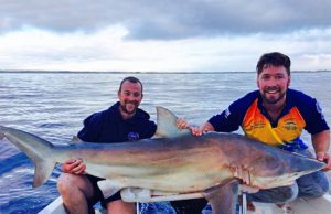 Brian Nolan and Marcus Pearson with another of the sharks – a bronze whaler this time – that they caught in 50 metres of water off the Black Rock outfall (Picture Kevin McLoughlin).