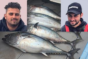 Four tuna to 20 kg or so that were caught on Monday by Manuel and Adam Vella amongst a shoal of newly arrived kingfish along Portland's north shore (Pictures: Bob McPherson).