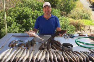 Michael Cave with a mixed bag of whiting and flathead taken by him and Charlie Gubbins (Picture: Mike Windsor).