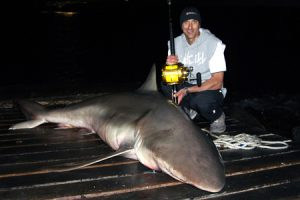 Shark wrangler Bill Athanasselis, with last week's shark from the Lorne Pier.