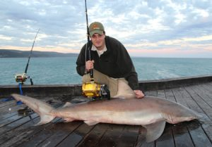 Shark wrangler: George Papavasiliou with his bronze whaler shark from the Lorne Pier (Picture: Bill Athanasselis).