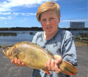 Jackson Toff of Pakenham with a 50 cm, 1.9 kg redfin from Lake Purrumbete (Picture and info from Lake Purrumbete Holiday Park).